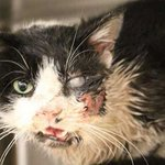 Twitter / @TimesLIVE: Zombie cat claws its way o ...