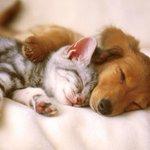 Twitter / @pulciakkia: Pane sogni e marmellata... ...