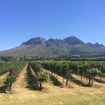 "so nice to see your updates! ""@BJonesCooper: The vineyards in South Africa are not ugly. #capetown #winetime http://t.co/SRXuUZcGHJ"""