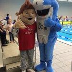 Schoolzwemkampioenschap Zwolle in volle gang @swol1894 #zwembaddevrolijkheid http://t.co/yhza2Ry6lU