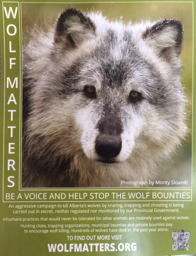 RT @wolfmatters: Please help spread the word. We need people badly, to pressure the government on these matters. #wolves #wolf matters http://t.co/gH4KiFS267