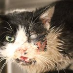 Zombie Cat Cheats Death, Surprises Owner 5 Days After Burial - http://t.co/158yP15Sn0 http://t.co/PMvzVhAg1z