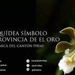 #ElOro |a orquídea Encyclia naranjapatensis Dodson será presentada este viernes como Orquídea Emblemática de #ElOro http://t.co/EySr7fyFuE
