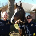 Great news! Owner located, says @ArlingtonPD . Horse had been found in Bowen, Pleasant Ridge neighborhood. http://t.co/6Tp70r74uO