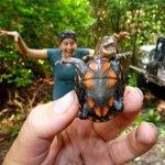 """""""@brincadero: queria ser tão feliz quanto essas tartarugas http://t.co/9xTLkEC31h"""" @erikpaixao"""