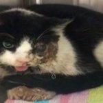 #CURIOSO La historia del gato zombie, un felino que volvió a la vida tras ser enterrado http://t.co/CbRJmeD4mx http://t.co/SrYmfHS4M9