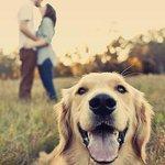 El chico que te gusta ama a todos los perros y al tuyo más! #DetallesQueEnamoran http://t.co/aDyugMidFn