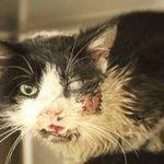 Gato é atropelado, dado como morto e enterrado, mas reaparece vivo 5 dias depois. http://t.co/taJ9SU3PQv http://t.co/BqsRxlbxI3