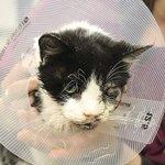 【奇跡かゾンビか】米フロリダ州で埋葬された猫が、墓から自力で這い出して帰宅 http://t.co/6oGzgF6RnM 飼い主は、猫が自動車にひかれて死んだと思っていた。ネットでは「ゾンビ猫」の愛称がつけられているという。 http://t.co/7zvRmQgeZO