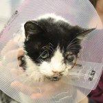 米フロリダ州で、自動車にひかれて死んだと思われた猫が、埋葬から5日後に自力で地中から這い出し、自宅に戻るという出来事があった ━━事故で埋葬の猫、米南部の墓から這い出し帰宅 http://t.co/c0uASHTpI7 http://t.co/m7HbZY9vVH