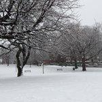 Lovely walk through Weston Park to @sheffieldpsy @sheffielduni this morning #snow http://t.co/jfDHAOx7Gw