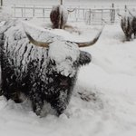Many of you woke up to a blanket of #snow this AM, including this fellow! Taken by Jerome Perks in Sheffield. Bryony http://t.co/qgCb82N9CO