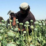 Almost 224,000 hectares of land used for production of poppy across Afghanistan in 2014. http://t.co/mVpykgTJmT http://t.co/emuRBrjFKd