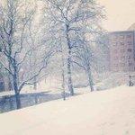 @sheffielduni Endcliffe in the snow #Sheffield #Snow http://t.co/9lrIXHY5tS