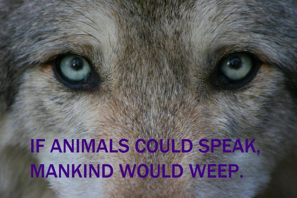 ~If animals could speak, mankind would weep~  http://t.co/SFoajwa1ue