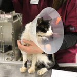 Declared dead and buried, Bart the cat rises from the grave http://t.co/0gkJJDpJHM