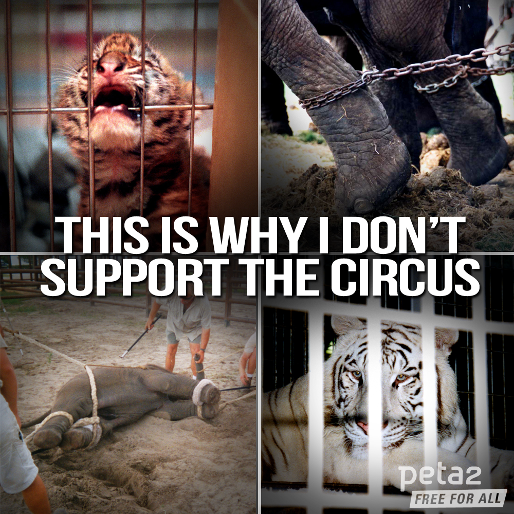 facts of animal abuse in circus Enjoy the circus the animals don't e-newsletters to receive action alerts about the circus, exotic animals, and other animal welfare animal abuse/human.