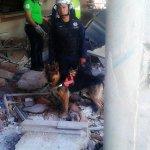 En búsqueda de personas en #HospitalMaternoInfantil participan binomios caninos de @PoliciaFedMx http://t.co/ykIN0MF0bG