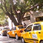 Movilización de taxistas? Ahh cierto que en #Cúcuta aún NO hay #Picoyplaca @TUKANAL @MovilidadCucuta @areacucuta http://t.co/YqQzYH1Oxd