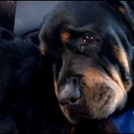 Cachorro se recusa a deixar corpo do irmão morto. http://t.co/G6xMAUYl3v [@BlogPageNFound] http://t.co/J5Ez8jojpM