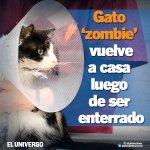 Un gato que fue enterrado vuelve con su dueño, cinco días después. VIDEO y más detalles: http://t.co/SKRAD98760 http://t.co/zBamWJ4t5C