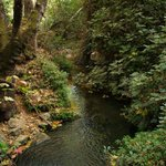 """Azzaytoun springs """"Olive springs"""" are water wells in #safad, #Palestine .. #smcpal http://t.co/qCtsU1Sb8s"""