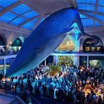 Una gran ballena dominará la entrada del Museo de Historia Natural de Londres: http://t.co/Y5EUOvfqTY http://t.co/YoTI5bYFr0