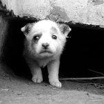 В Беларуси введена уголовная ответственность за жестокое обращение с животными. http://t.co/R76wVi89ns