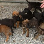 Unclaimed reward money in animal abuse case will help rescue groups http://t.co/zLZW9UGJpi http://t.co/kvv4Q295SS