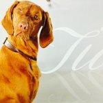 """""""@teeeeiah: """"@TraneyMarea: @teeeeiah http://t.co/QprilzJd5b"""" wtf is this? Lol"""" lmao. A dog named Tia duh"""
