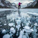 【画像16枚】カナダ・バンフ国立公園の凍結した湖でアイスバブルが発生 http://t.co/YTXitaKUJG …  湖底の枯れた植物たちが発するメタンガスが水温の低い水面に上昇して凍り、このような神秘的な光景が生まれる http://t.co/CRraVhh2nk