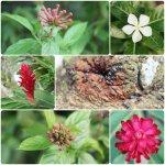 #SoyTanRomanticoQue veo tu bella mirada en cada flor que fotografío. http://t.co/R4d4nmcXRo