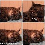 Каждое утро хочу быть котом http://t.co/g6CcWgzVSs