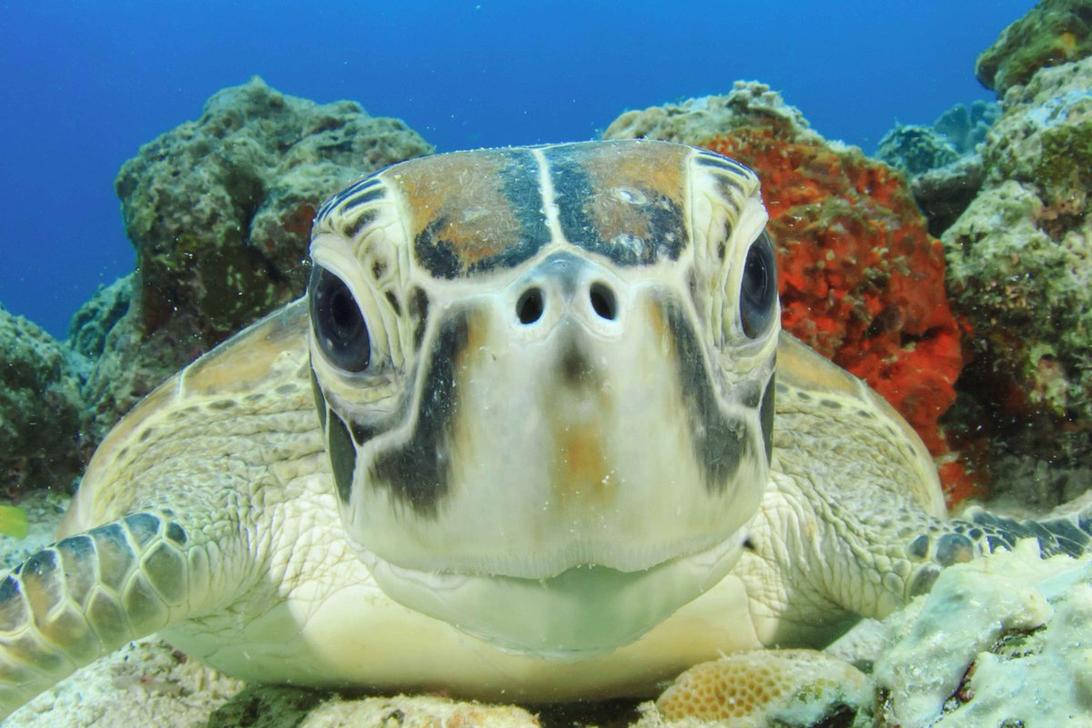 Cuteness overload at The Great Barrier Reef. http://t.co/O565jL0dOs