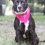 #Pet of the Week: Help Allie find a forever home where she can run and play http://t.co/Gtzgv8UD2y via @abcactionnews http://t.co/QzpzXFpFSR