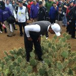 Yikes. Not the best day for @TigerWoods. Caption this! #abc15 http://t.co/wJEz5AhVJ9