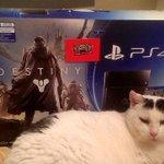 """CONCOURS : Gagne ta """"Playstation 4"""" / Chat en option, lol ! RT et SUIS @PlayHappyClub : Résultat le 15/02 à 20h :D http://t.co/aGgA5JCZKO"""
