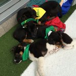 Puppy Bowl Cafe opens in downtown #Phoenix http://t.co/PrTW790dLU http://t.co/RyRAuoJvyy