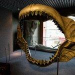 El #Acuario de #Sevilla inaugura una exposición de mandíbulas de tiburones - http://t.co/EVQgwJecU7 http://t.co/VccyRkA7qA