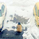 Nominee for the 2015 Boston SpaceSaver Awards: Penguin #bostonspacesaverawards @universalhub @saraherib @HeyRatty http://t.co/QiMN9hbxEd