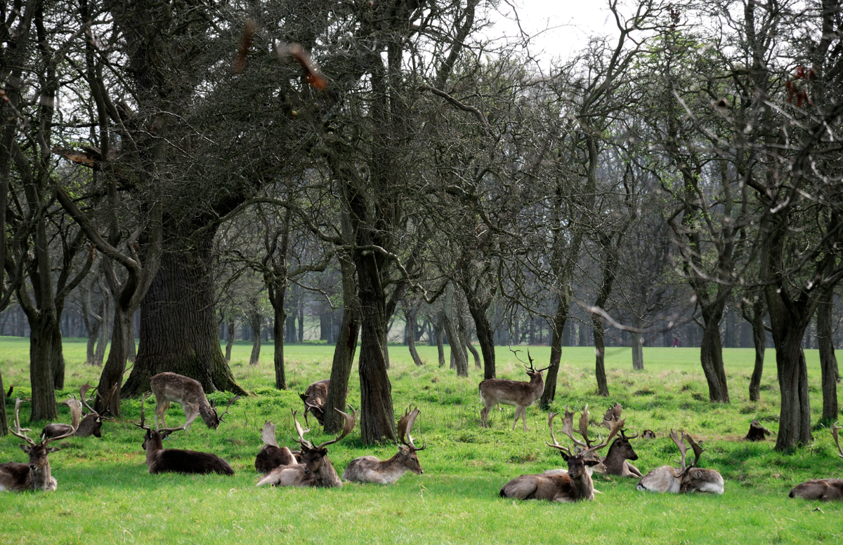 A4: Whenever we're in Dublin, Phoenix Park is a must! The wild deer are a sight: