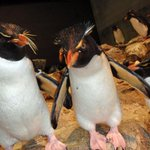 All penguins present & accounted for at the Aquarium, @ConciergeBoston. @hparker @universalhub @saraherib @HeyRatty http://t.co/m7gr90cVOB