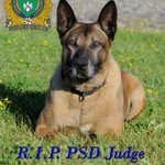 """@wpgpolice: #RIPJudge Remembering PSD Judge who passed away earlier this week.   http://t.co/MM1onEF9eK http://t.co/KkixE5LVuh""/:(:("