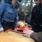 Another shot of the cougar #inbend @CityBendPoliceDept @ODFW @KTVZ http://t.co/FlRXtrVECk