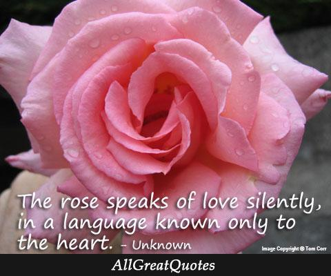 The rose speaks of love silently, in a language known only to - http://t.co/iYl08wfzDF http://t.co/02LmpjljSL