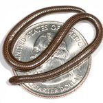 Our Absurd Creature of the Week is a tiny snake that can curl up on a quarter http://t.co/rrFJUlDSBA http://t.co/wgBz8ucZmQ