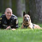 RIP Judge, WPS K9 service dog responsible for 500 arrests, with Patrol Sgt. Scott Taylor. Judge was 11. #bn http://t.co/Gj1bcRxgXM