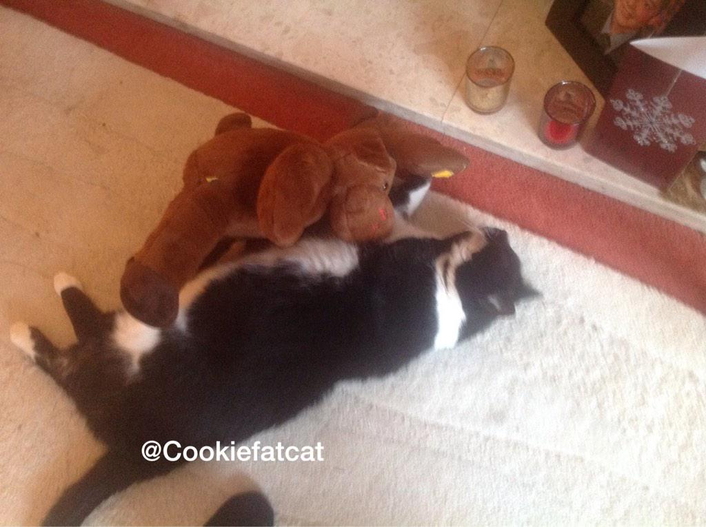 RT @Cookiefatcat: Trying to teach the reindeer #jellybellyfriday  Not a good pupil #meow http://t.co/MR8Qtjju2A