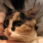 【拡散希望】元飼い猫のようで、かなり人懐こいです。迷い猫の可能性も考え警察、動物病院に問い合わせましたが該当がありませんでした。すごく甘えん坊で賢い子です。 #拡散希望 #福岡 #猫 #捨て猫 #里親募集 #sos #緊急 http://t.co/gxZGHJbbpW