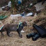 Animals of war in eastern #Ukraine. cc @RolandOliphant http://t.co/cGTUk4IfuC http://t.co/mtR5BV8uvJ via @RFERL